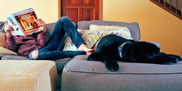 perro en el sofa