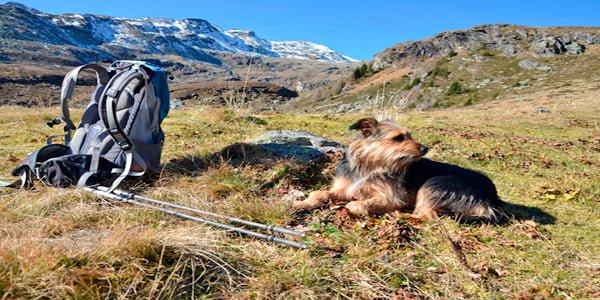 Perro haciendo senderismo por montaña