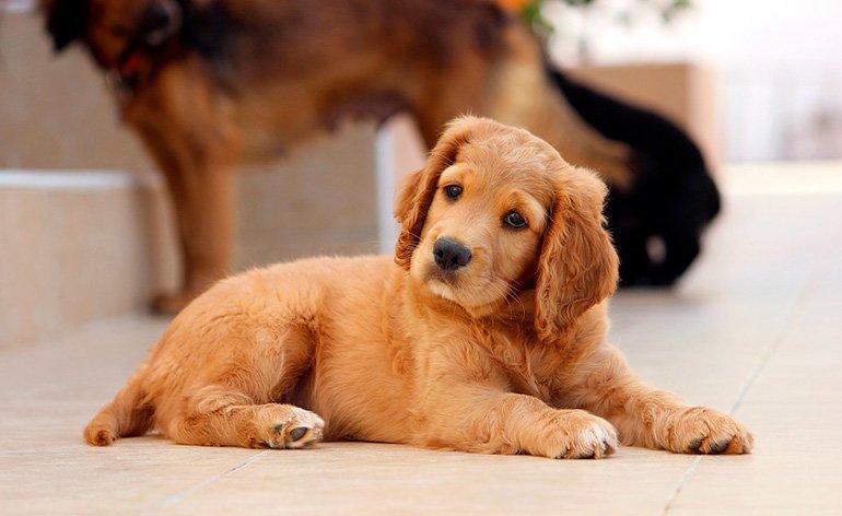 perro-extrañado-y-confundido