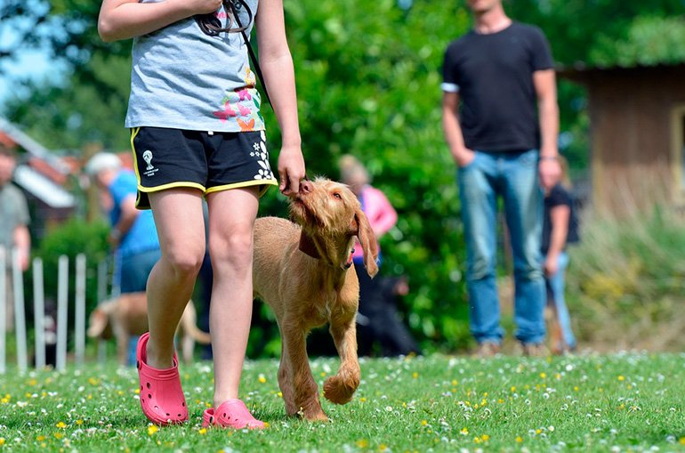 perro-paseando-con-su-dueña