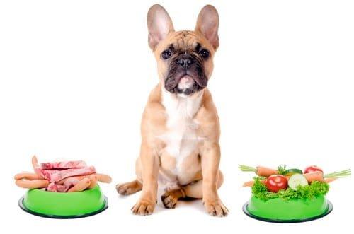 perro con alergia alimentaria y comida casera