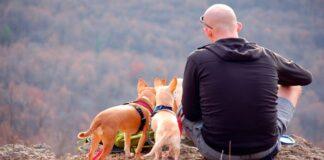 perros haciendo senderismo