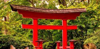 tori-japonés