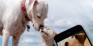 apps-para-perros