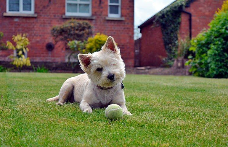 jardín-con-perro