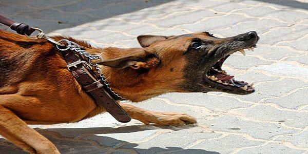 perro atacando