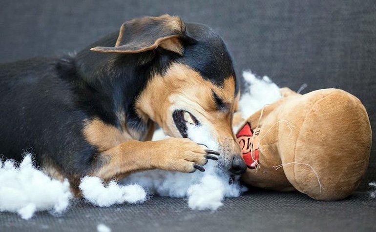perro-comiendose-un-peluche