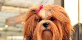 perro-con-el-pelo-largo
