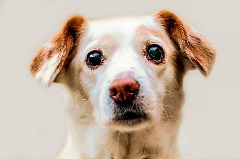 perro-con-grandes-ojos