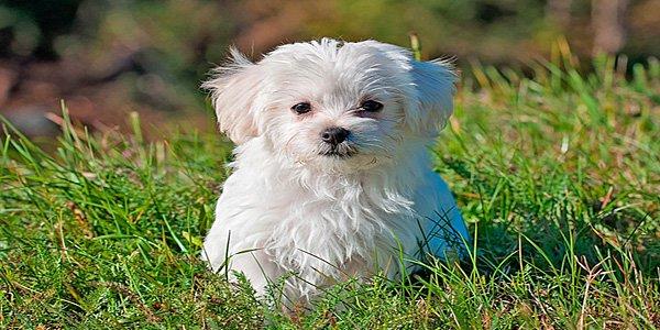 perro de tamaño pequeño