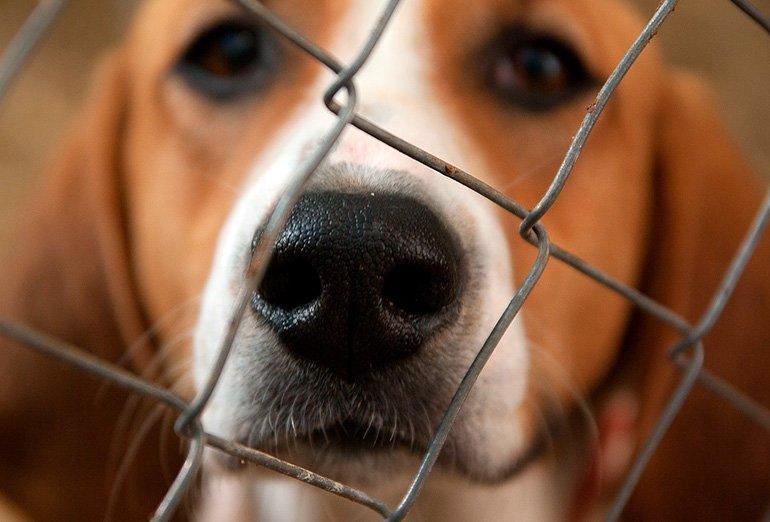 """dog-in-kennel """"width ="""" 770 """"height ="""" 522 """"srcset ="""" https://soyunperro.com/wp-content/uploads/2019/10/perro-en-perrera.jpg 770w, https: // soyunperro.com/wp-content/uploads/2019/10/perro-en-perrera-300x203.jpg 300w, https://soyunperro.com/wp-content/uploads/2019/10/perro-en-perrera-768x521 .jpg 768w, https://soyunperro.com/wp-content/uploads/2019/10/perro-en-perrera-696x472.jpg 696w, https://soyunperro.com/wp-content/uploads/2019/10 /perro-en-perrera-620x420.jpg 620w """"tailles ="""" (largeur maximale: 770 pixels) 100vw, 770 pixels"""