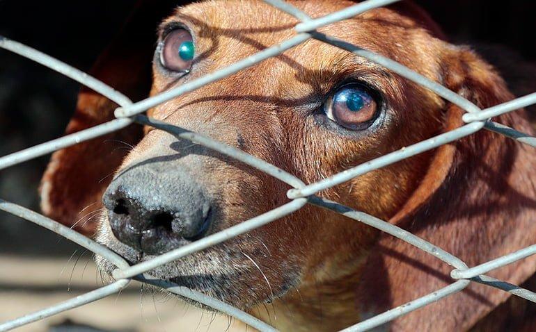 """chien-verrouillé dans la protection """"width ="""" 770 """"height ="""" 478 """"srcset ="""" https://soyunperro.com/wp-content/uploads/2019/10/perro-encerrado-protectora.jpg 770w, https://soyunperro.com/wp-content/uploads/2019/10/perro-encerrado-en-protectora-300x186.jpg 300w, https://soyunperro.com/wp-content/uploads/2019/10/perro -encerrado-en-protectora-768x477.jpg 768w, https://soyunperro.com/wp-content/uploads/2019/10/perro-encerrado-en-protectora-356x220.jpg 356w, https://soyunperro.com /wp-content/uploads/2019/10/perro-encerrado-en-protectora-696x432.jpg 696w, https://soyunperro.com/wp-content/uploads/2019/10/perro-encerrado-en-protectora- 677x420.jpg 677w """"tailles ="""" (largeur maximale: 770 pixels) 100vw, 770 pixels"""