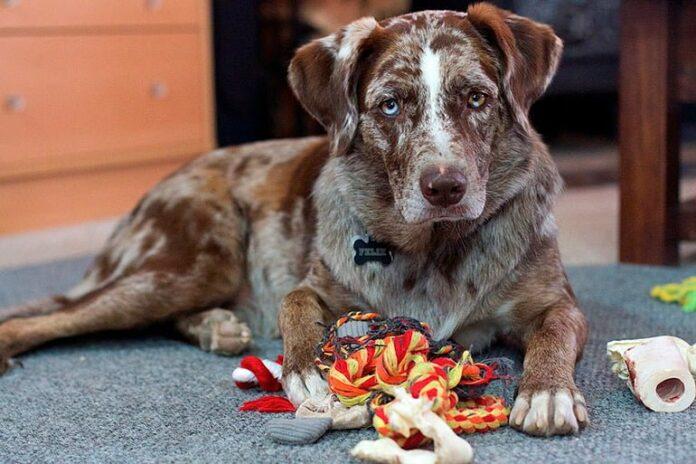 perro-mordiendo-sus-juguetes