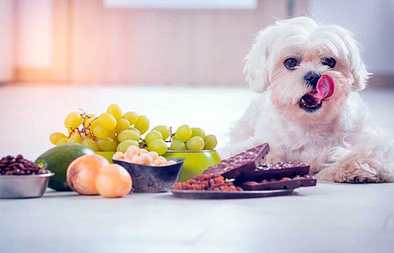 """chien préparé à manger des aliments nuisibles """"width ="""" 770 """"height ="""" 496 """"srcset ="""" https://soyunperro.com/wp-content/uploads/2019/10/perro-preparado-para-comer -alimentos-nocivos.jpg 770w, https://soyunperro.com/wp-content/uploads/2019/10/perro-preparado-para-comer-alimentos-nocivos-300x193.jpg 300w, https://soyunperro.com /wp-content/uploads/2019/10/perro-preparado-para-comer-alimentos-nocivos-768x495.jpg 768w, https://soyunperro.com/wp-content/uploads/2019/10/perro-preparado- à-manger-nourriture-nocif-696x448.jpg 696w, https://soyunperro.com/wp-content/uploads/2019/10/perro-preparado-para-comer-alimentos-nocivos-652x420.jpg 652w """"tailles = """"(largeur maximale: 770 pixels) 100vw, 770 pixels"""