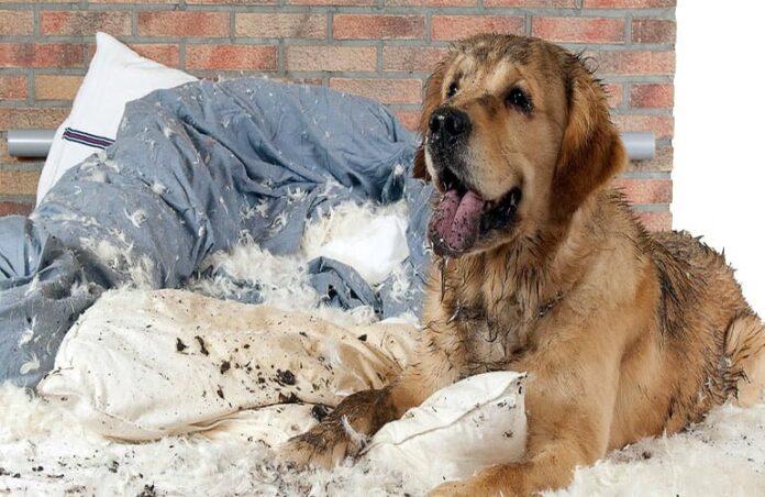 perro-que-ha-roto-su-cama