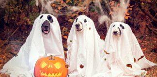 perros-disfrazados-de-fantasmas