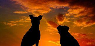 silueta-de-perros