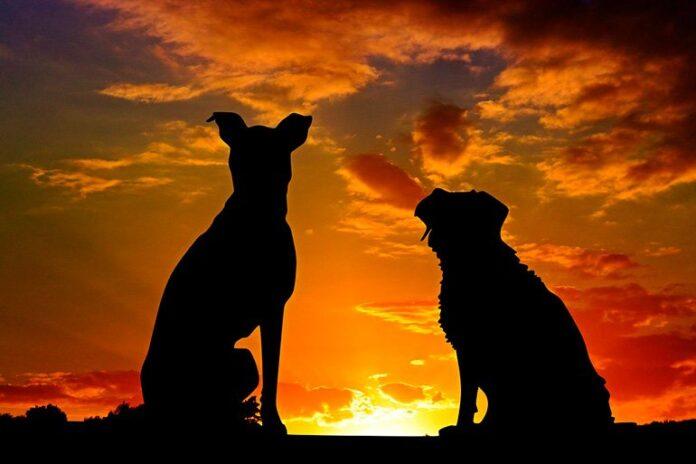 silhouette de chien