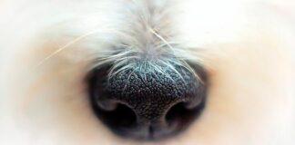 trufa-de-un-perro