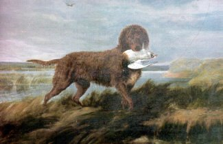 "Tweed Water Spaniel ""width ="" 325 ""height ="" 210 ""srcset ="" https://soyunperro.com/wp-content/uploads/2019/11/Tweed-Water-Spaniel.jpg 325w, https: // soyunperro. com / wp-content / uploads / 2019/11 / Tweed-Water-Spaniel-300x194.jpg 300w, https://soyunperro.com/wp-content/uploads/2019/11/Tweed-Water-Spaniel-324x210.jpg 324w ""tailles ="" (largeur maximale: 325px) 100vw, 325px"