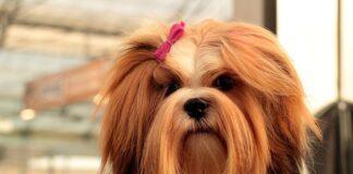 perro-con-pelo-largo-y-cuidado