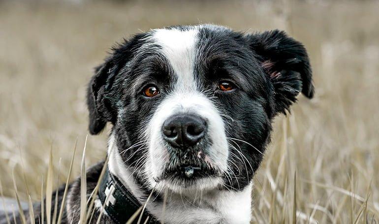 perro-con-temblor-de-boca