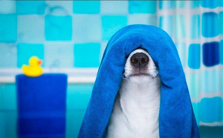 perro-con-una-toalla