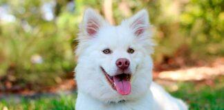 perro-de-pelo-blanco