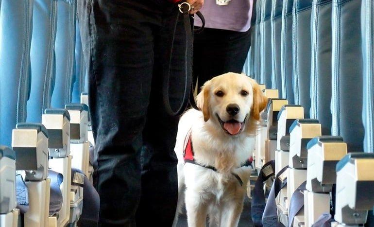 perro-dentro-de-un-avión