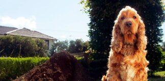 perro-desenterrando-un-hueso