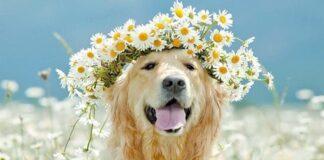perro-ecologico