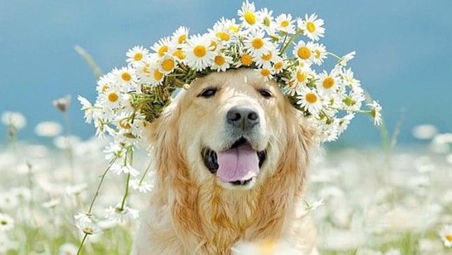 Pienso ecol gico para perros mito o realidad soyunperro - Pienso para perros de caza ...