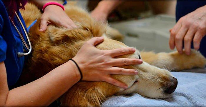 perro-en-clinica-veterinara-para-ser-autanasiado
