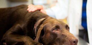 perro-en-el-veterinario