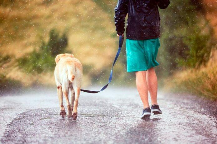 perro-paseando-bajo-la-lluvia