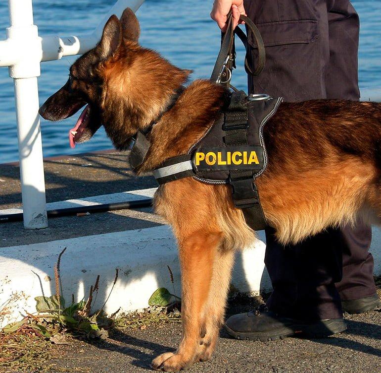 perro-policía-paseando