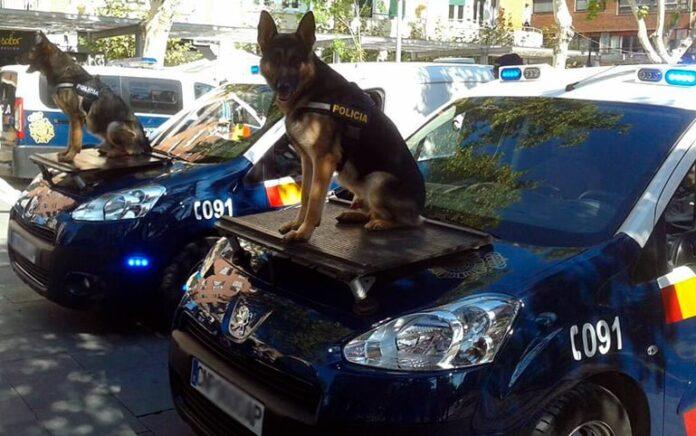 perros-policía-sobre-el-coche-policial