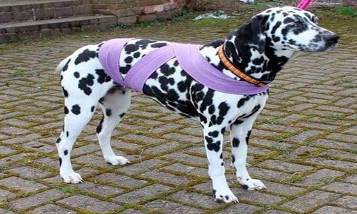 Tellington Ttouch en perro