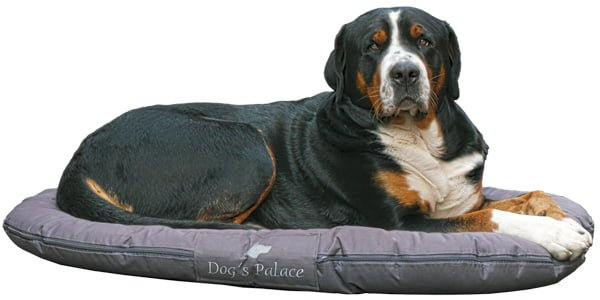 perro tumbado sobre su nueva cama