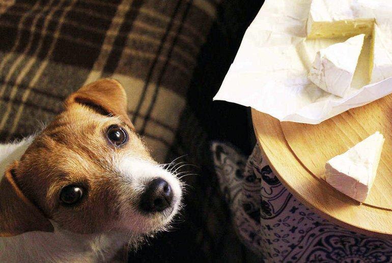 perro-esperando-queso