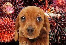 perro y fuegos artificiales