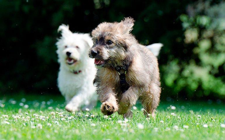 Cuántas Razas De Perro Hay En El Mundo