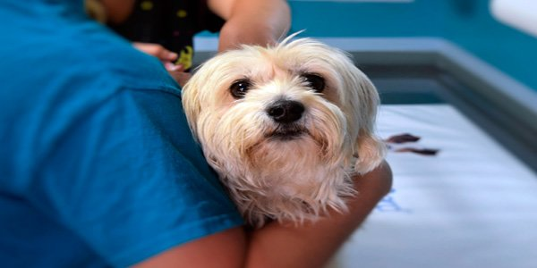 perro en clinica veterinaria