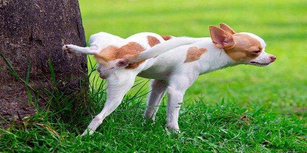perro orinando en un arbol