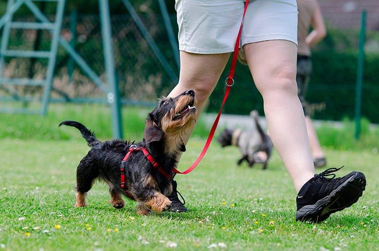 perro-recibiendo-ordenes-de-su-humano