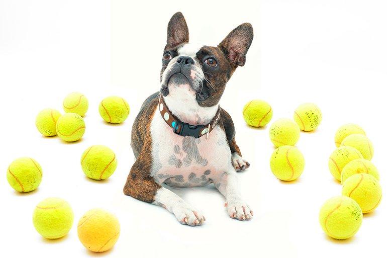 "chien-avec-balles de tennis ""width ="" 770 ""height ="" 513 ""srcset ="" https://soyunperro.com/wp-content/uploads/2020/02/perro-con-pelotas-de-tenis .jpg 770w, https://soyunperro.com/wp-content/uploads/2020/02/perro-con-pelotas-de-tenis-300x200.jpg 300w, https://soyunperro.com/wp-content/uploads /2020/02/perro-con-pelotas-de-tenis-768x512.jpg 768w, https://soyunperro.com/wp-content/uploads/2020/02/perro-con-pelotas-de-tenis-696x464. jpg 696w, https://soyunperro.com/wp-content/uploads/2020/02/perro-con-pelotas-de-tenis-630x420.jpg 630w ""tailles ="" (largeur max: 770px) 100vw, 770px"