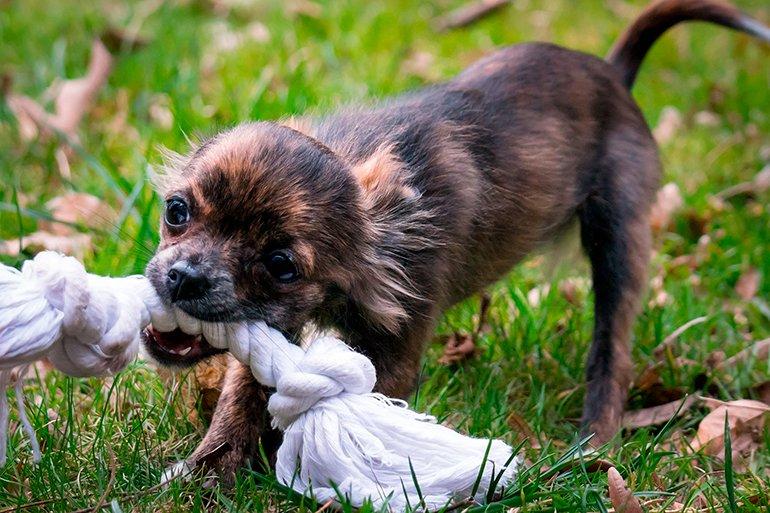 Jouets dangereux pour chiens (non recommandés)