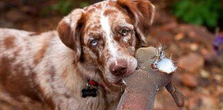 perro-masticando-un-peluche