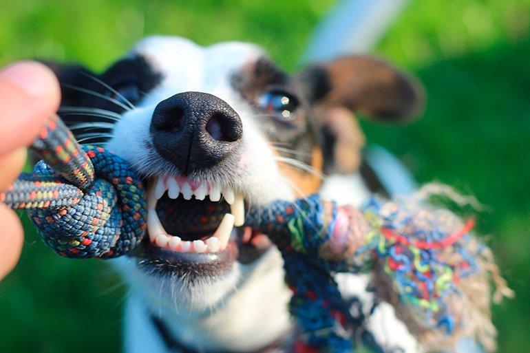 jugando-con-nuestro-perro-al-tira-y-afloja