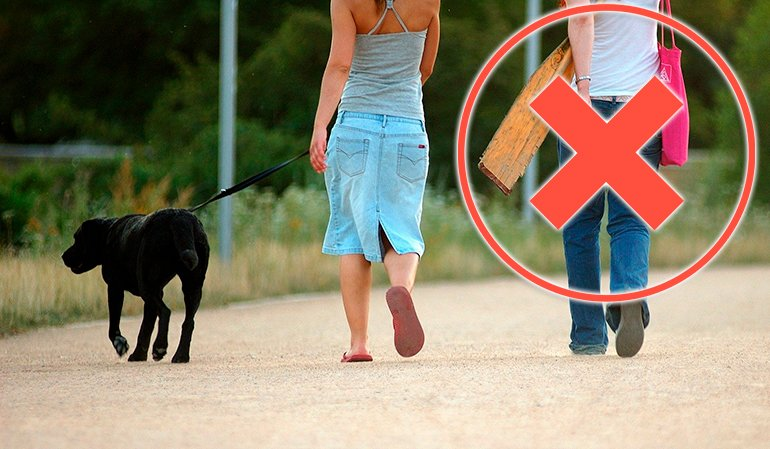 Puis-je promener mon chien? Coronavirus en Espagne